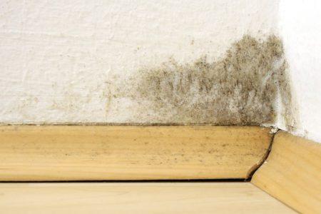Úskalím starého domu je vlhko a plísně