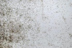 Profesionální odstranění plísní