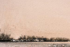 Odstranění plísně - co pomůže?