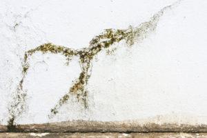 Pleseň v dome v Bratislave - tichý zabijak