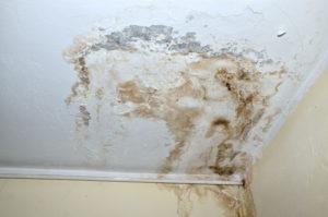 Čím odstranit plísně v bytě?