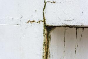 Odstraňování plísní a řas z povrchu fasády Praha 10
