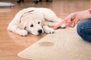 čištění matrací brno