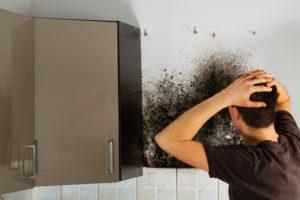 Čím odstranit plísně v domácnosti?