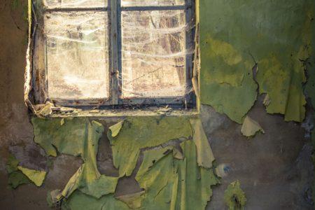 Pokojové rostliny jako původci plísní