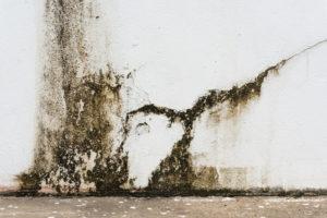 Čím se zbavit plísní na fasádě?