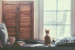 kvalitní mytí oken beze šmouh