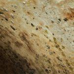 chemické odstranění plísně