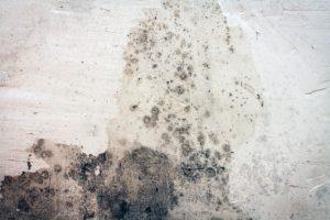 likvidace plísně z fasády domu