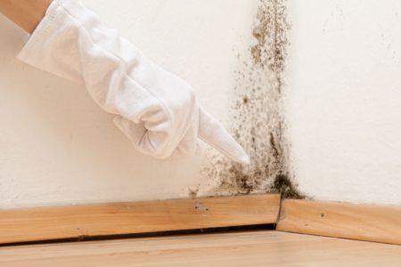 Nepodceňujte sílu řádného větrání, které redukuje vlhkost v bytě. Zbavení se plísní v Pardubicích.