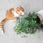 Odstránenie mačacích chlpov z kobercov