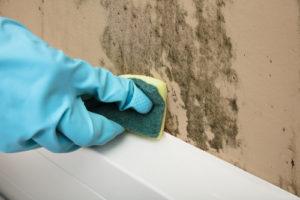Vyčištění stěny od plísně