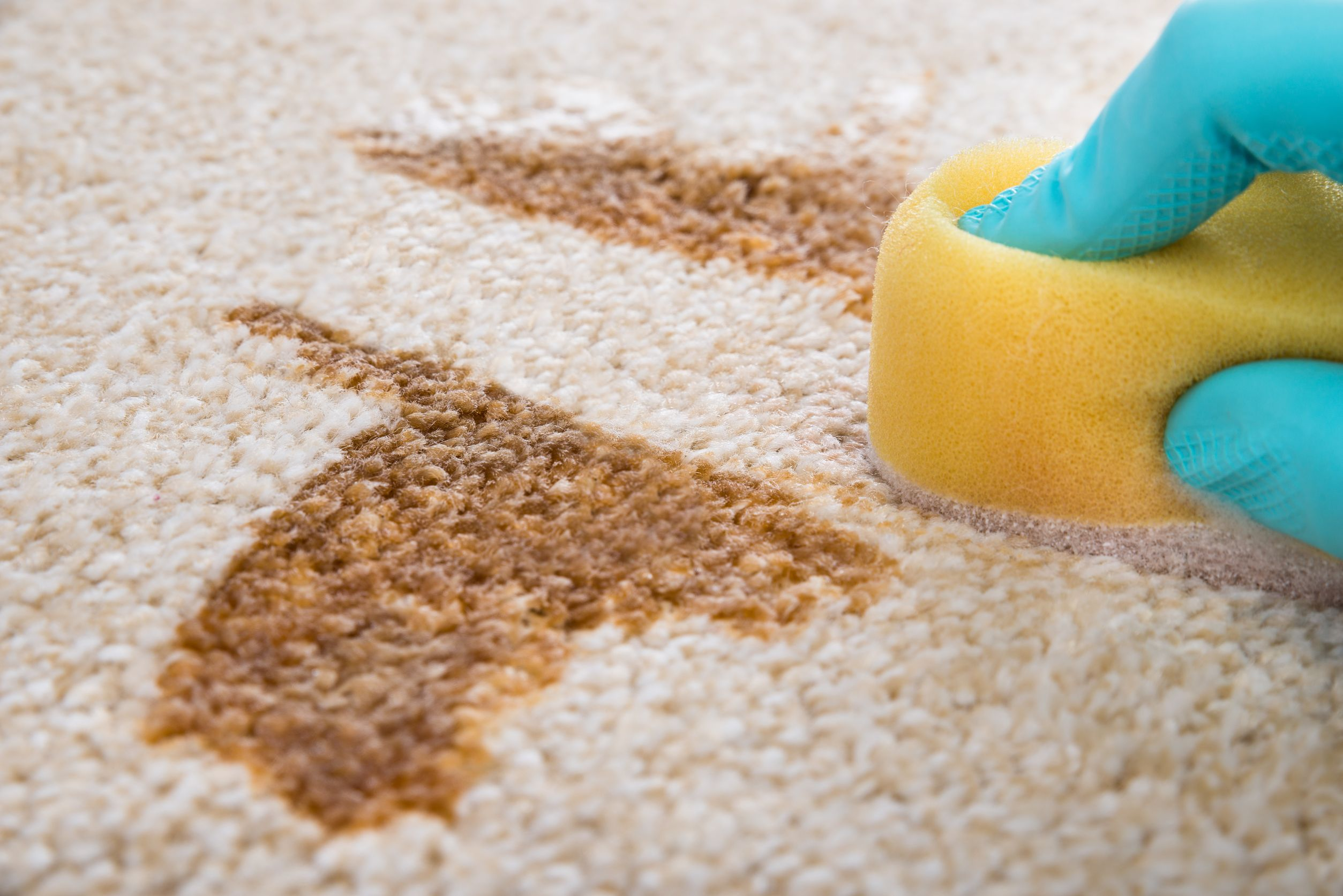 čistírna koberců praha 7