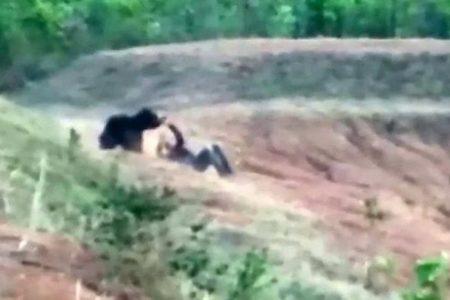 Ind si chtěl udělat selfie s medvědem, ten ho rozsápal