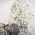 cena odstranění plísně