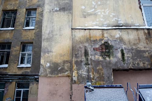 plíseň na zdi