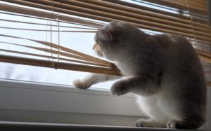 čím umýt okna