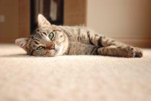 jak umýt koberec